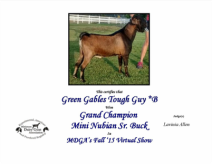 Newman Lake Amazing Love Sire: Green Gables Tough Guy *B