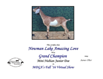 Newman Lake Amazing Love Grand Champion Mini Nubian Junior Doe 2016 MDGA Fall Virtual Show