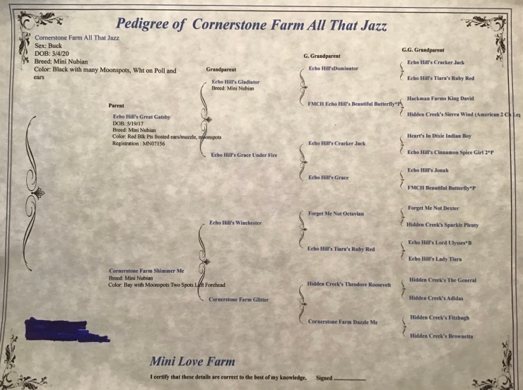 Cornerstone Farm  All That Jazz Purebred  Extended Pedigree